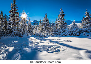 Cold winter sunrise in the mountains