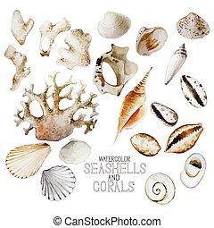 colección, acuarela, corales, conchas marinas