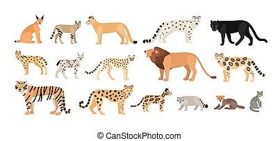 colección, blanco, colorido, salvaje, vector, familia , aislado, felidae, animales, exótico, cats., zoológico, caricatura, plano, doméstico, illustration., characters., lío, fondo., lindo, diferente