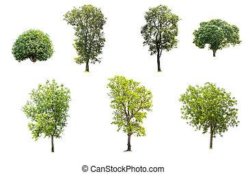 colección, de, árboles, aislado