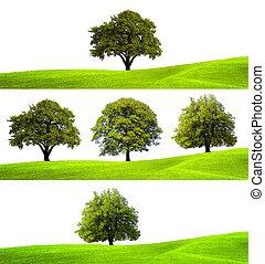 colección, de, árboles verdes