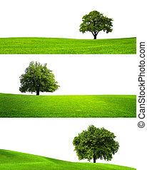 colección, de, aislado, árbol verde