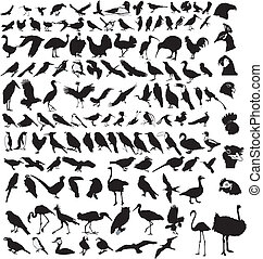 colección, de, aves