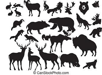 colección, de, bosque, animales