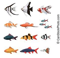colección, de, de agua dulce, peces