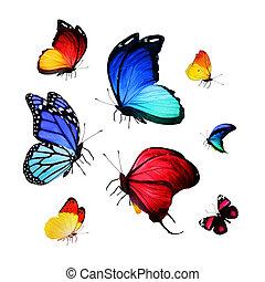 colección, de, diferente, brillante, mariposas
