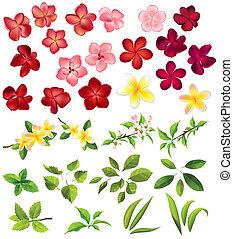 colección, de, diferente, flores, y, hojas, blanco