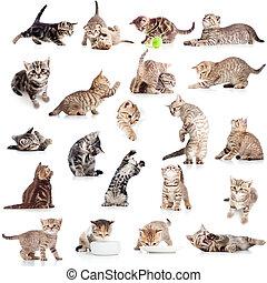 colección, de, divertido, juguetón, gato, gatito, aislado, blanco, plano de fondo