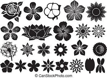 colección, de, flores