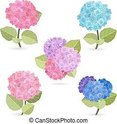 colección, de, flores, hydrangea