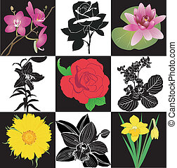 colección, de, flores, rosas, lirios