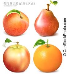 colección, de, fresco, maduro, fruits.