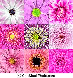 colección, de, nueve, flor rosa, macros