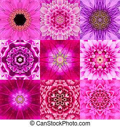 colección, de, nueve, púrpura, concéntrico, flor, mandala,...