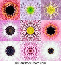 colección, de, nueve, rosa, concéntrico, flor, mandalas,...