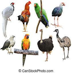 colección, de, pájaro, aislado