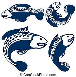 colección, de, peces