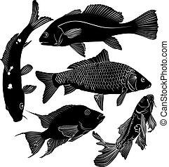 colección, de, pez