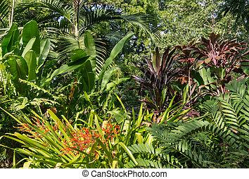 colección, de, plantas, crecer, en, tropical, rainforest