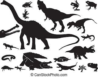 colección, de, reptiles