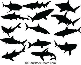 colección, de, tiburones