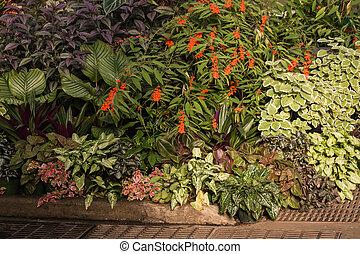 colección, de, tropical, plantas