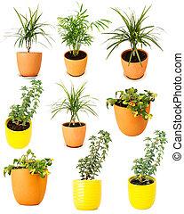 colección, de, vario, potted, plantas