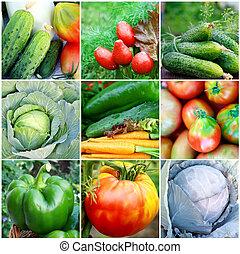 colección, de, verduras frescas