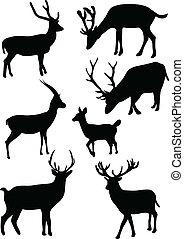 colección, deers
