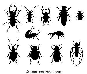 colección, escarabajos