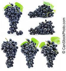 colección, grupo, de, azul, uva, aislado
