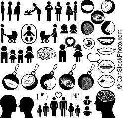 colección, humano, relacionado, iconos