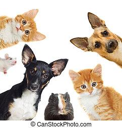 colección, mascotas