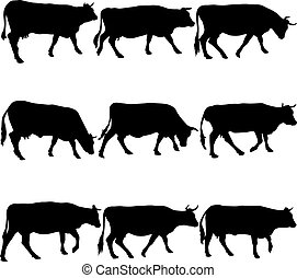 colección, negro, siluetas, de, cow., vector, illustration.