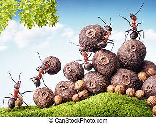 colecionar, estoque, formigas, sementes, trabalho equipe, equipe