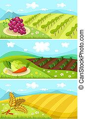 colheita, cartão