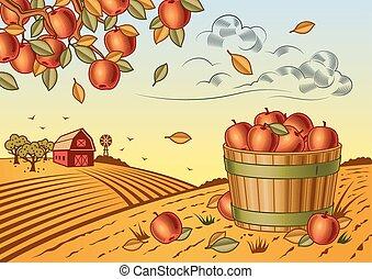 colheita, maçã, paisagem