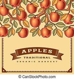colheita, retro, cartão, maçã