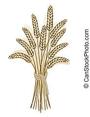 colheita trigo