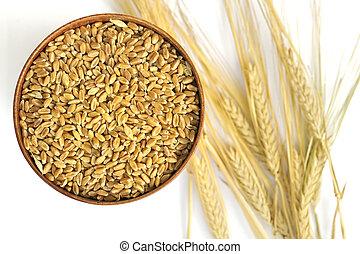 colheita, trigo