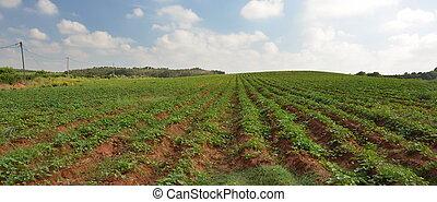 colheitas, crescendo, ligado, fértil, terra fazenda, em,...