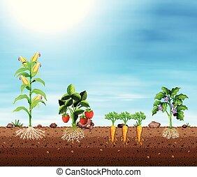 colheitas, diferente, jogo