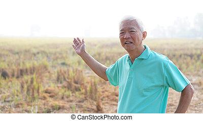 colhido, modernos, campo, asiático, agricultor, frente, sorrindo, arroz, sênior, feliz