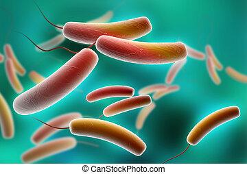 Coli bacteria - Digital illustration of Coli bacteria in...