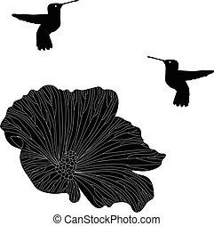 colibrí, colibri, vector, colección, de, pájaro, silhouettes.