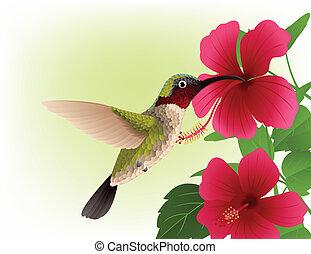 colibrí, con, flor roja
