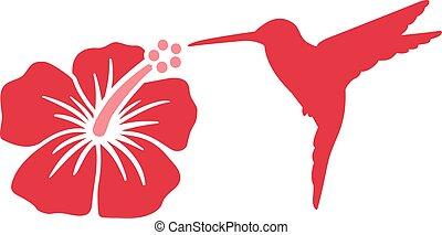 colibrí, con, hibisco, flor