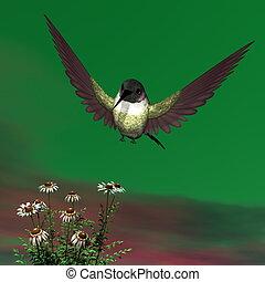 colibrí costa, -, 3d, render