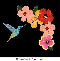 colibrí, floral