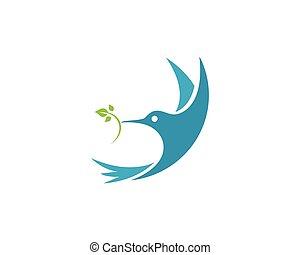 colibrí, logotipo, plantilla